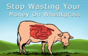 Stop Wasting Your Money on Wheatgrass (It's Toxic!)