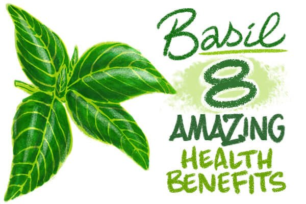 Health Benefits of Basil (one may help your love life!)
