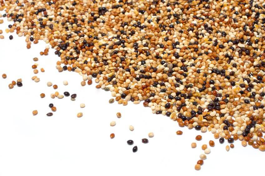 Millet: The Amazing Lectin-Free Healthy Carb
